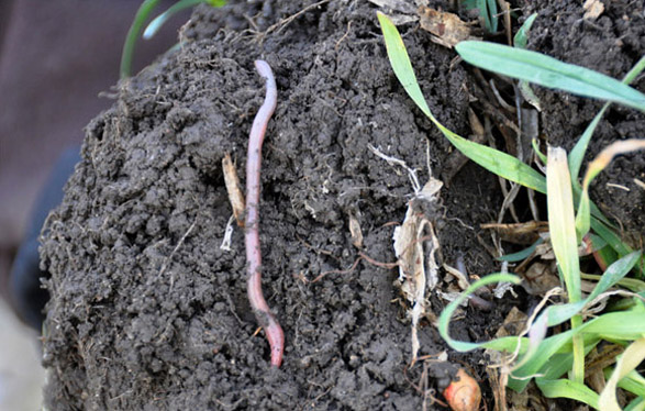 Science results earthworm watch for Mineral soil vs organic soil